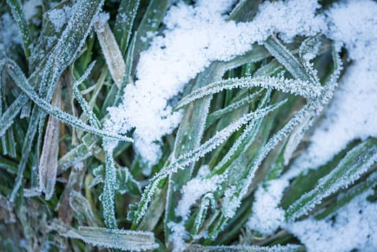 frost on grass blade